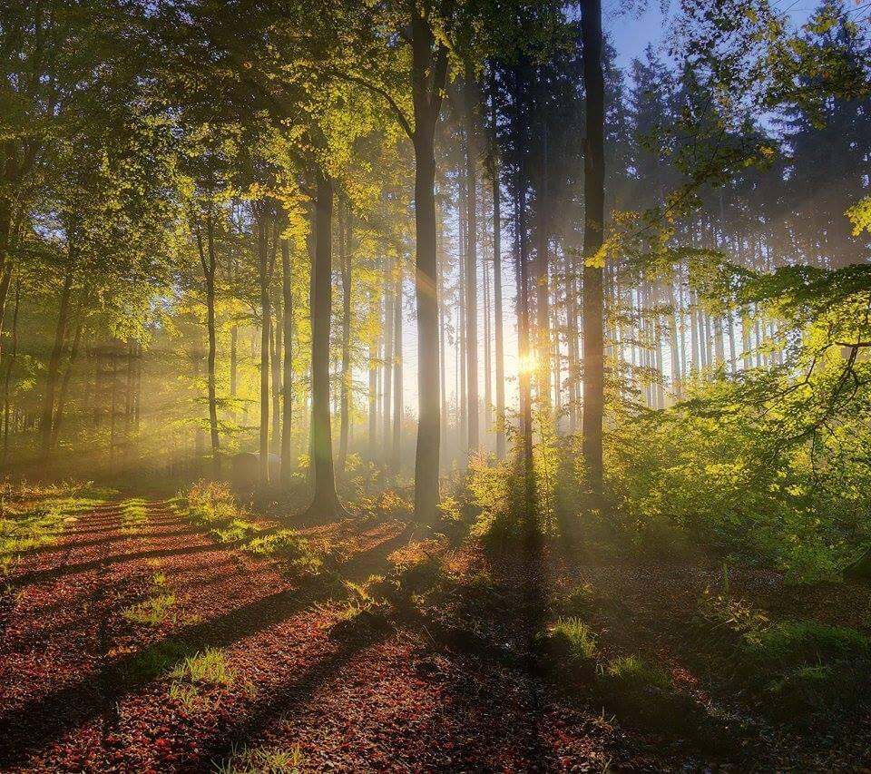 Engelkarteziehen Licht im Wald